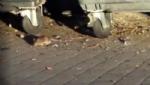 NICHELINO - Allarme topi in piazza Aldo Moro, la denuncia dei Cinque Stelle - LE FOTO - - immagine 1