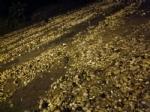 Tromba daria sul territorio: capannoni scoperchiati, auto fuori strada e strade allagate  - VIDEO E FOTO - - immagine 9