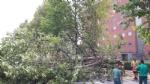 NICHELINO - Alberi pericolanti, la polizia locale chiude via Turati - immagine 1