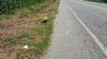 CARIGNANO - Scoppiano le polemiche dopo lennesimo incidente sulla sp 122 costato la vita a un motociclista carignanese - immagine 1