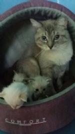 MONCALIERI - Vergognoso abbandono di una gatta con i cuccioli dentro un sacchetto di plastica - immagine 2