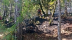 PIOSSASCO - Nuovo incendio sul monte San Giorgio. Vigili del fuoco e squadra Aib in azione - immagine 5