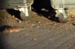 NICHELINO - Allarme topi in piazza Aldo Moro, la denuncia dei Cinque Stelle - LE FOTO - - immagine 2
