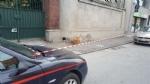 MONCALIERI - Allarme in via Tenivelli per una valigia sospetta abbandonata - immagine 2