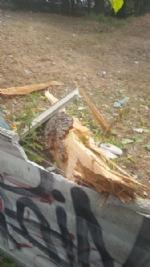 NICHELINO - Un fulmine distrugge albero e recinzione in via Stupinigi - LE FOTO - - immagine 2