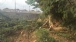 NICHELINO - Un fulmine distrugge albero e recinzione in via Stupinigi - LE FOTO - - immagine 3