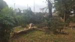 NICHELINO - Un fulmine distrugge albero e recinzione in via Stupinigi - LE FOTO - - immagine 4