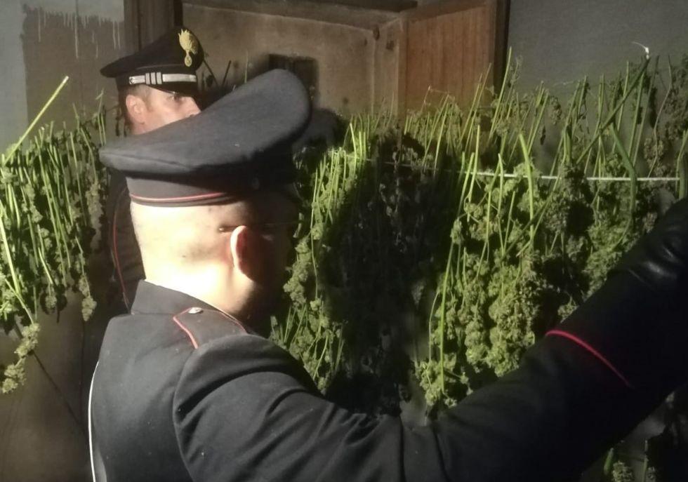 CANDIOLO - La cascina abbandonata trasformata da due albanesi in un laboratorio della marijuana - FOTO e VIDEO