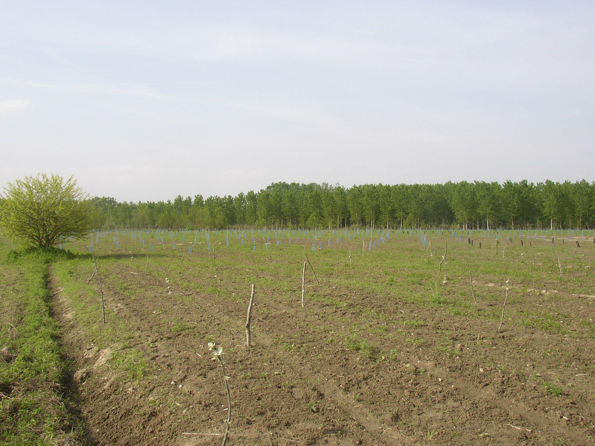 AMBIENTE - Orbassano, Rivalta e Piossasco coinvolte nel progetto della Foresta del Po piemontese