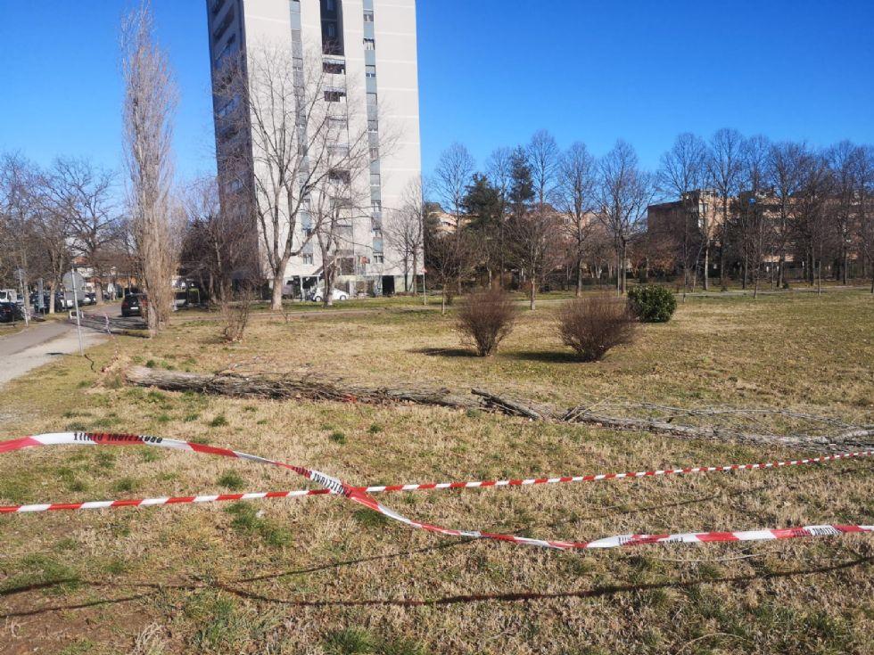 VENTO FORTE - Decine di interventi dei vigili del fuoco: alberi caduti a Nichelino e Beinasco