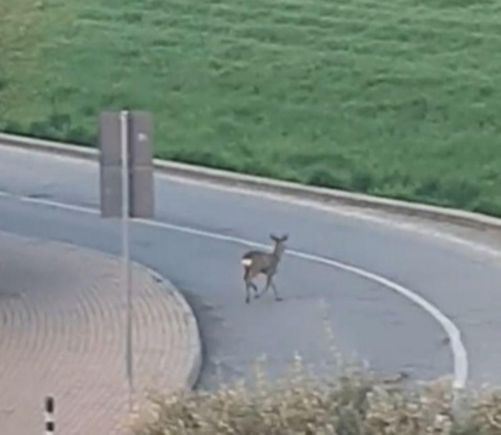 VIRUS - Gli animali riprendono possesso delle zone dominate dall'uomo