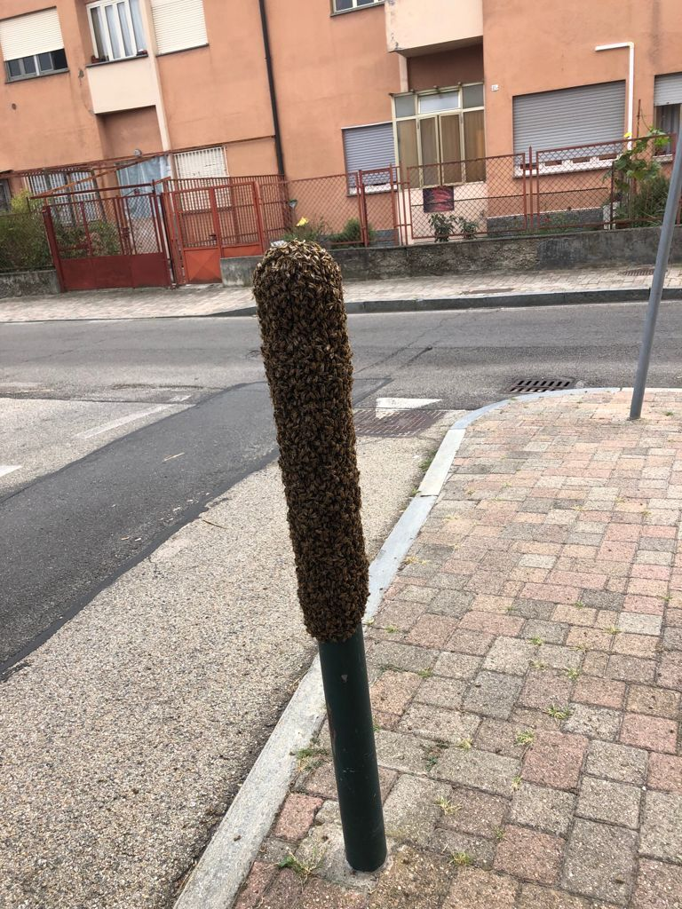 MONCALIERI - Il palo sul marciapiede si trasforma in un maxi alveare