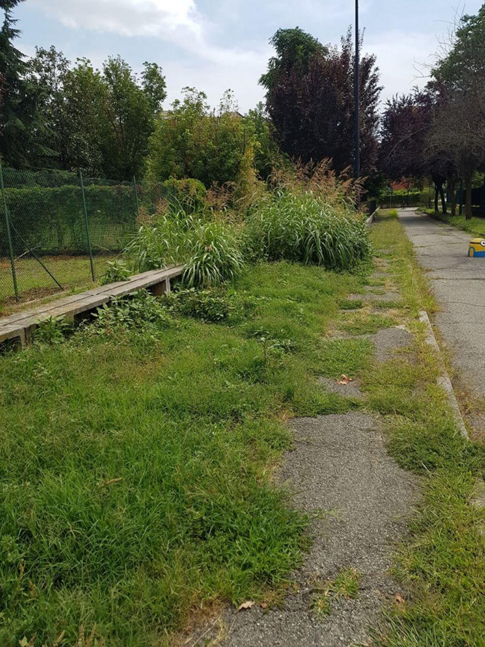 BEINASCO - L'erba alta si mangia i marciapiedi a Borgo Melano