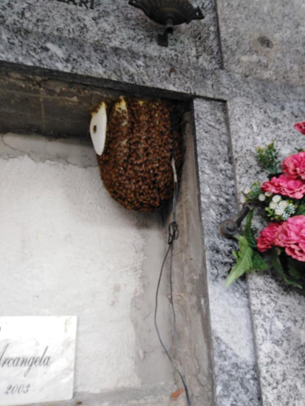 RIVALTA - Le api fanno l'alveare al cimitero e qualcuno tenta di incendiarlo