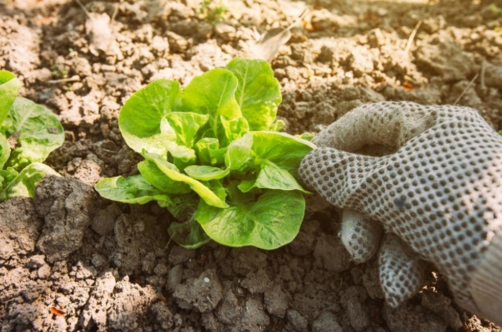 CARMAGNOLA - Gli agricoltori amatoriali potranno ritornare a coltivare i loro orti