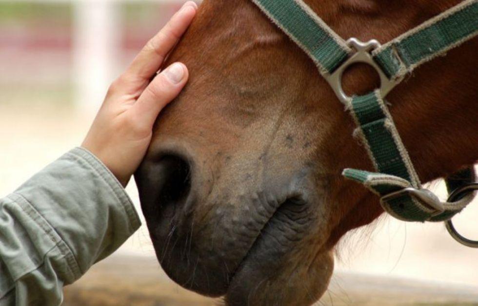 LA LOGGIA - I cavalli fuggono sulla strada, recuperati dai carabinieri