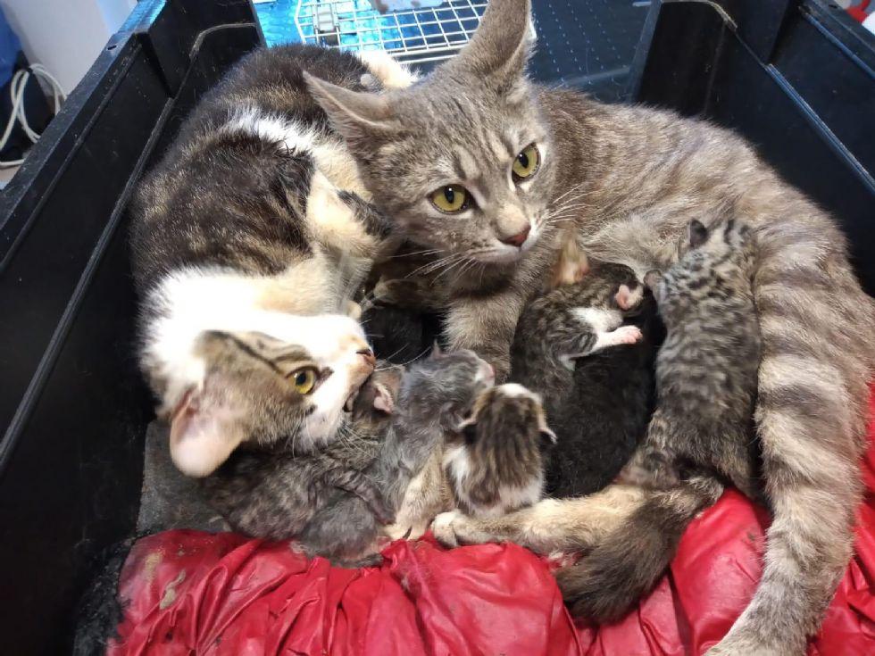 NICHELINO - Dodici gattini abbandonati in una gabbia: gara di solidarietà per adottarli