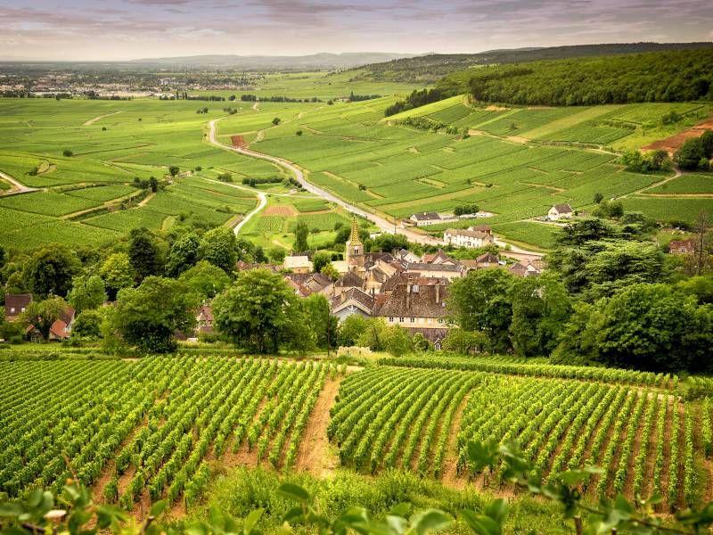 I vini della Borgogna resistono alla pandemia