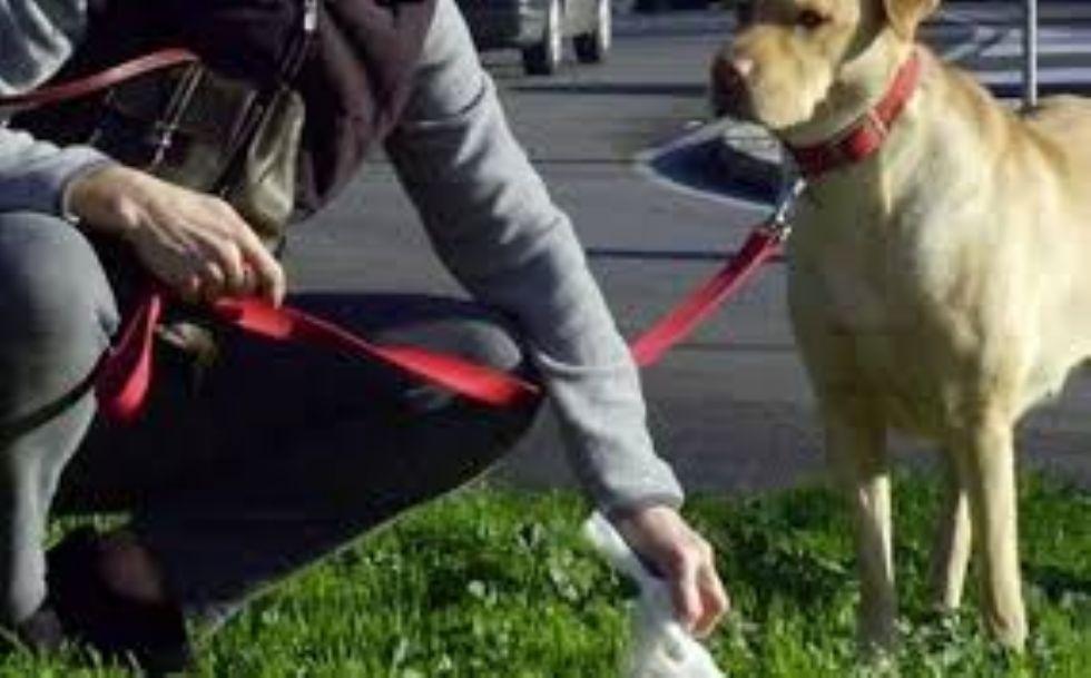 BEINASCO - Progetto del Dna canino per combattere le deiezioni non raccolte