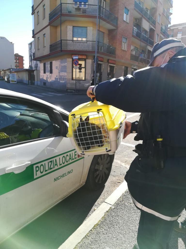 NICHELINO - Coniglietto abbandonato: lo salvano gli agenti della polizia locale