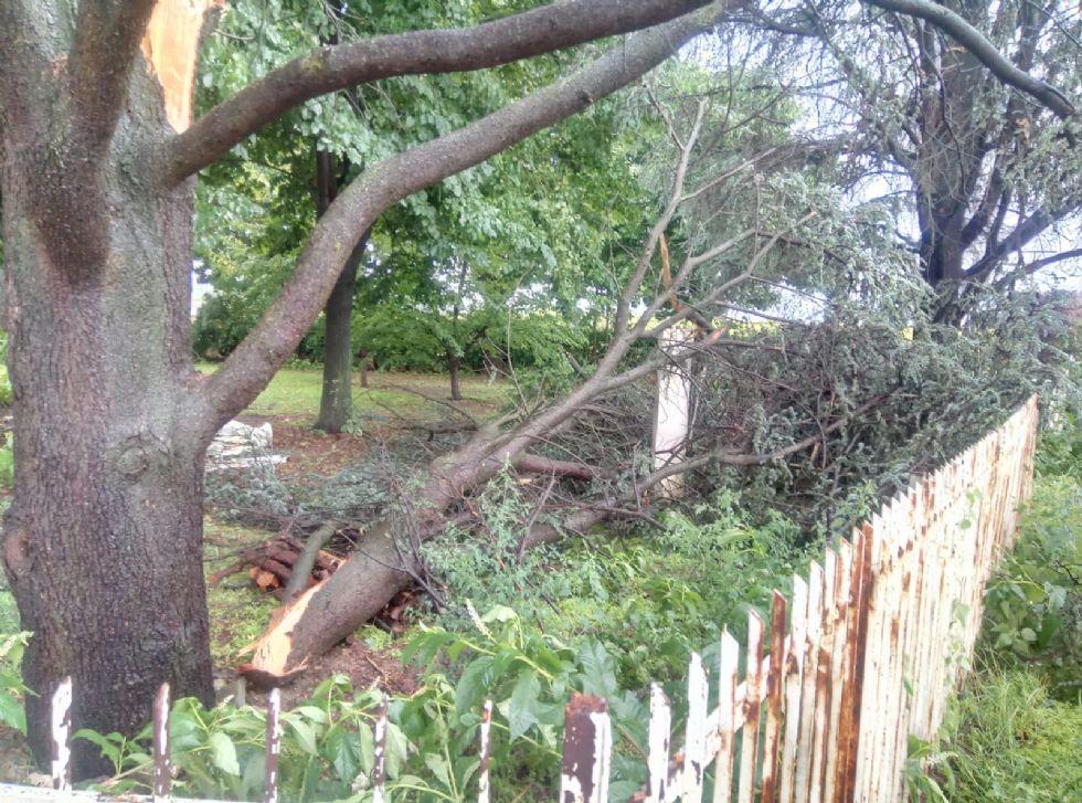 PIOBESI - Il forte vento abbatte due alberi: paura all'allevamento canino