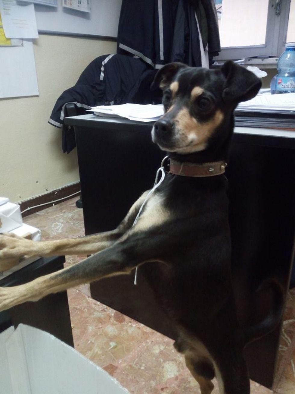 NICHELINO - Il cane abbandonato viene salvato dall'ex padrone
