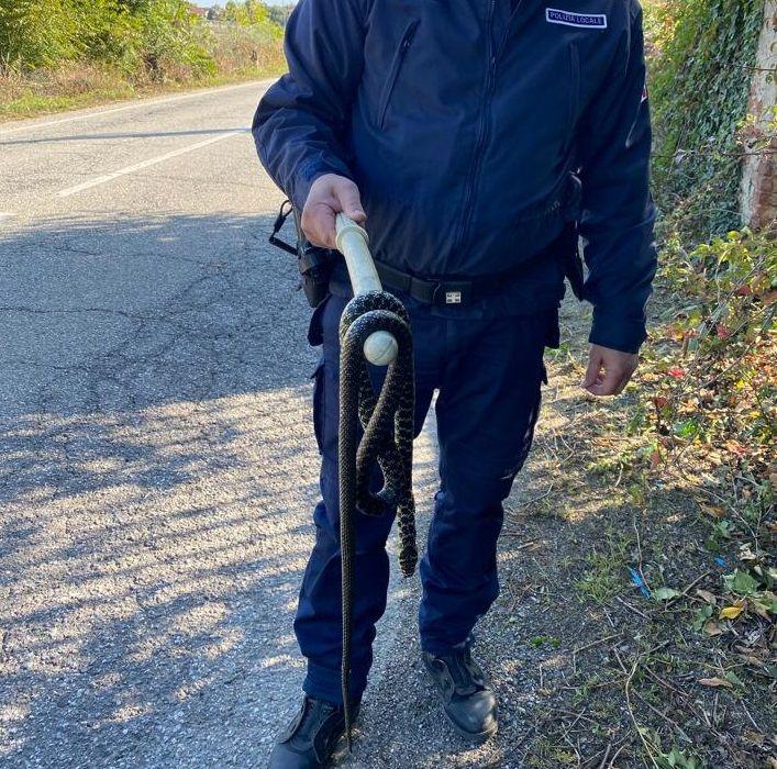 LA LOGGIA - 'Aiuto c'è un serpente enorme' ma era già morto